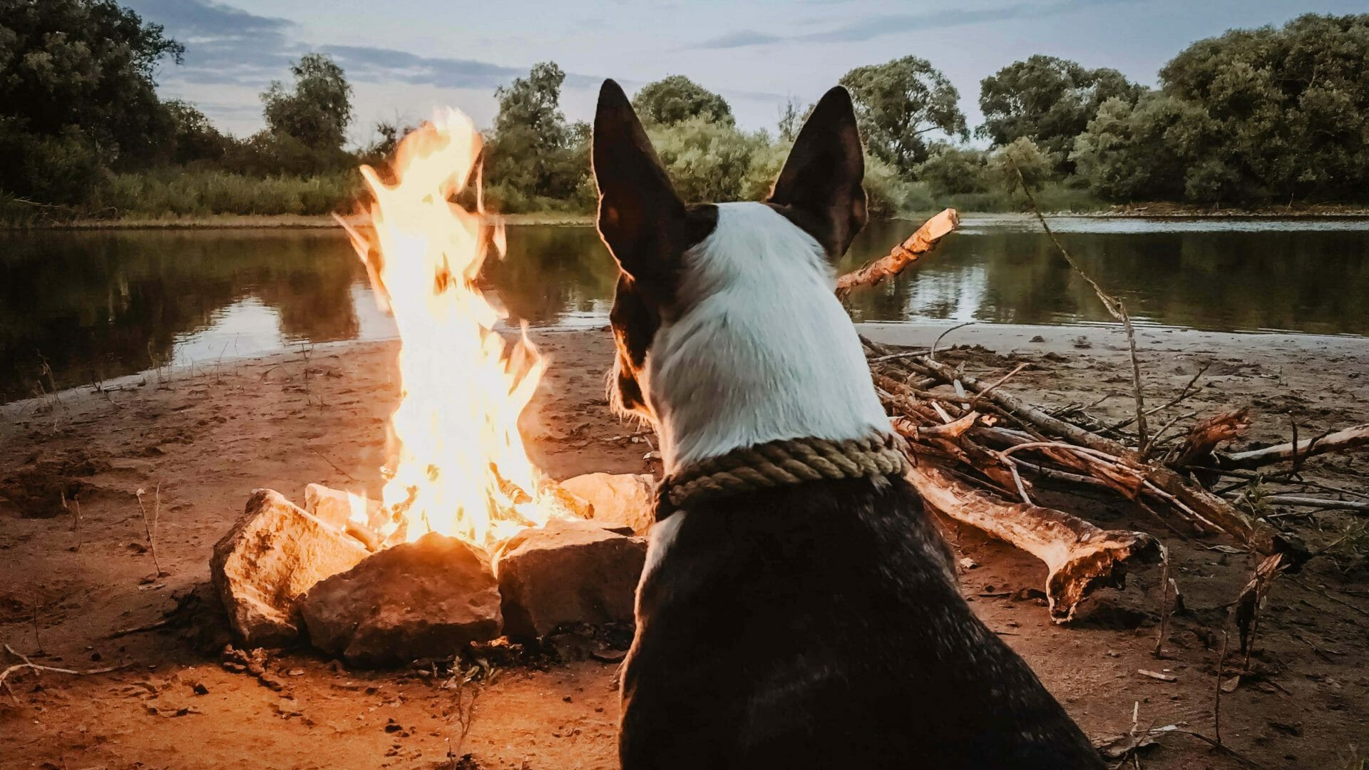 Dog-at-a-camping-ground-near-camp-fire-e1529977346302
