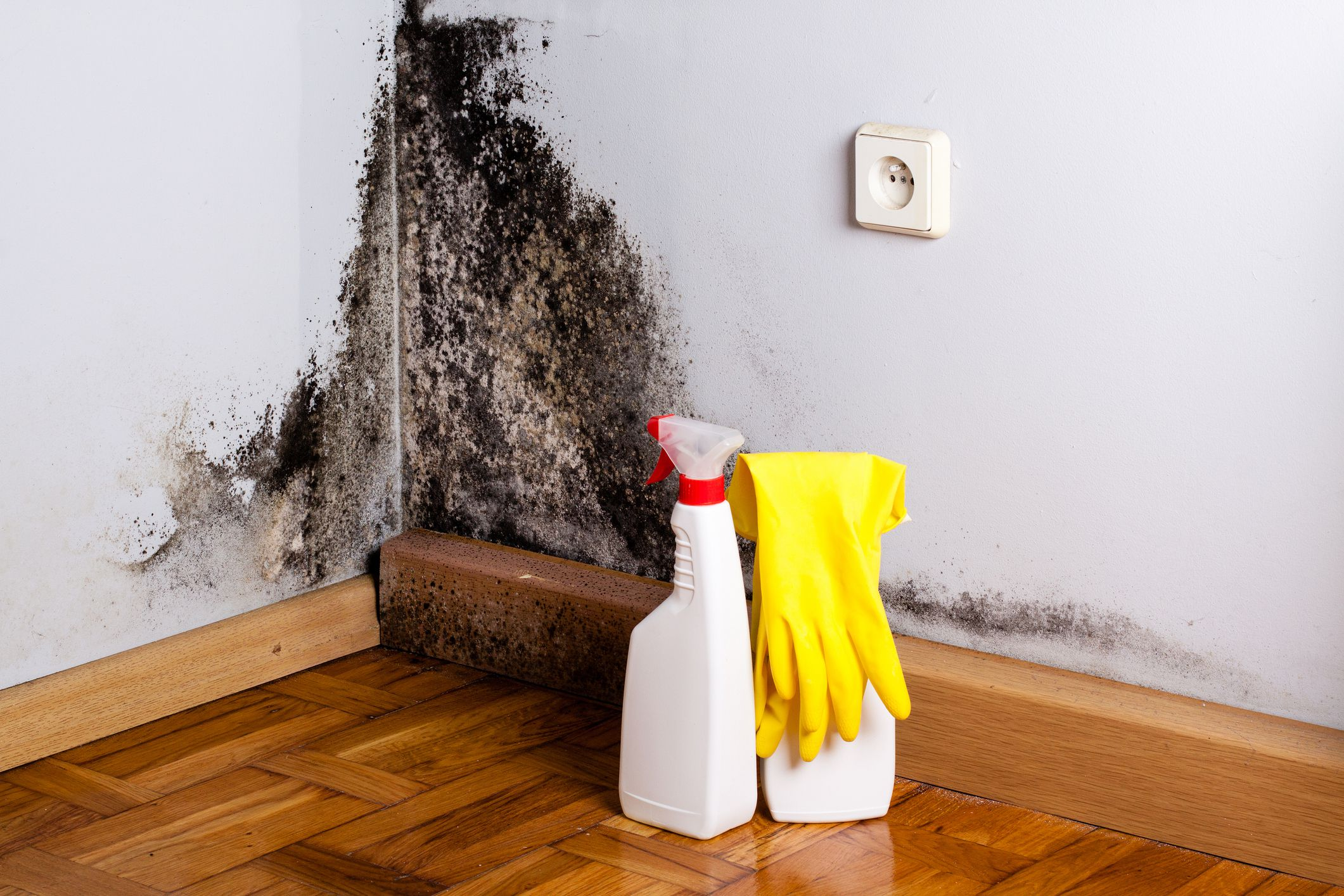 What Is The Best Product To Kill Mold