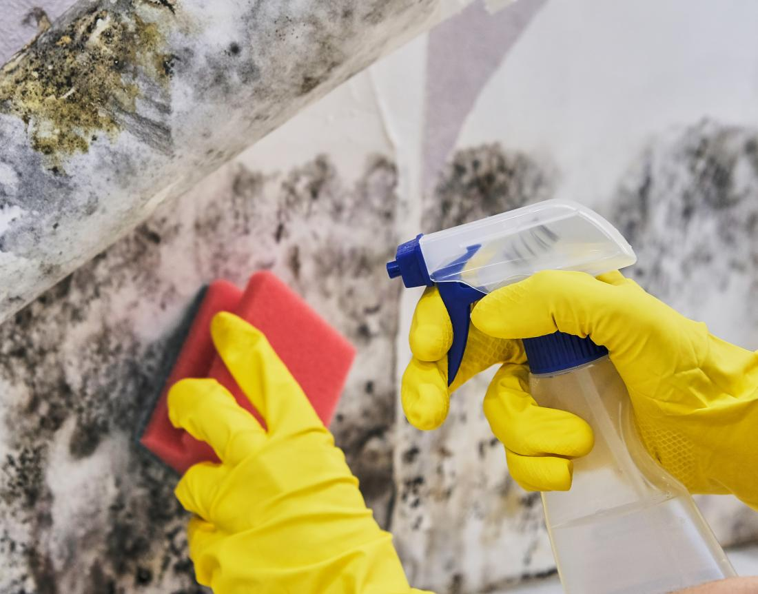 a-person-wearning-gloves-cleans-mold-off-the-wall