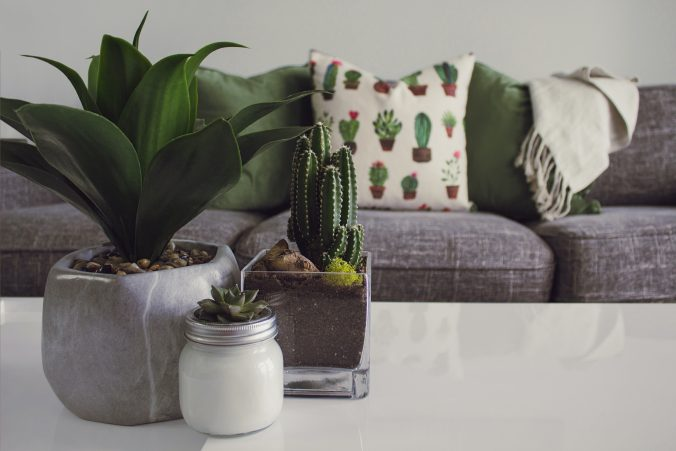 plants on table used as decoration